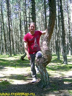 Куршская коса (Калининградская область, Россия)